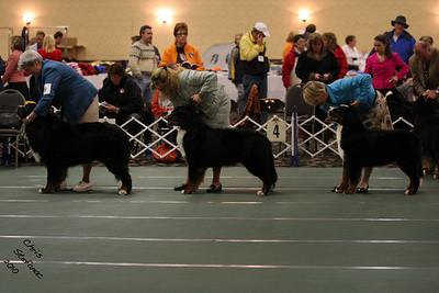 Stud Dog BMDCA 2010