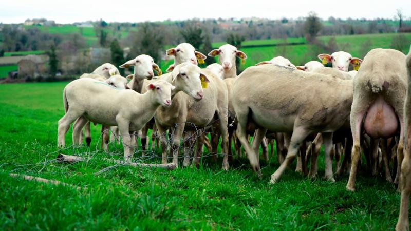 agneaux-pres.png