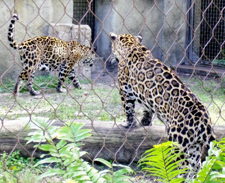 Zoo WPB