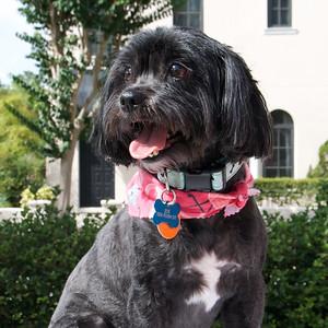 Dog Calendar Candidates