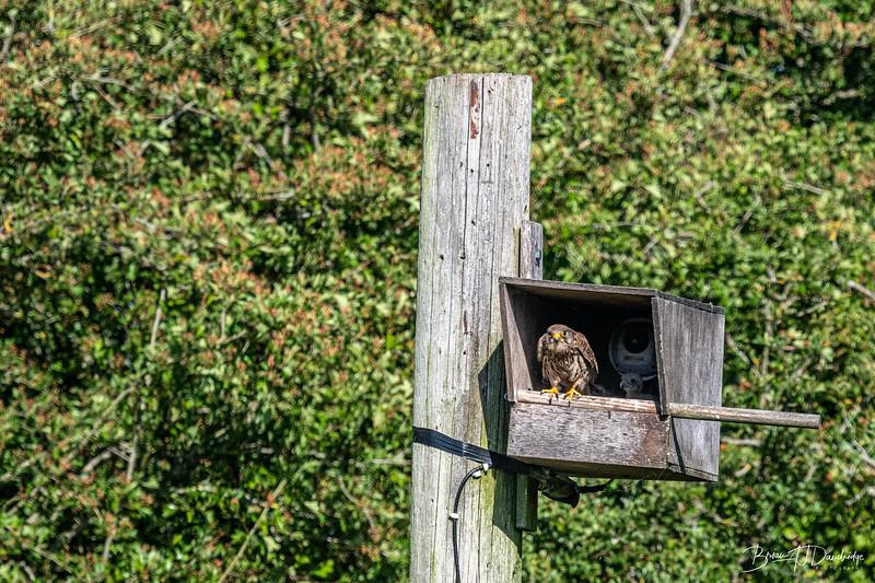 Woods Mill_850-4174.jpg