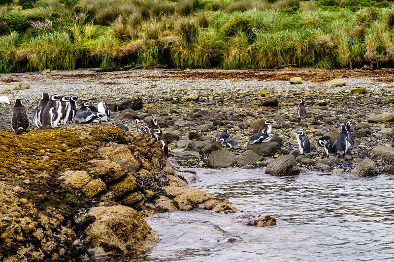 Patagonia 2018-02540.jpg