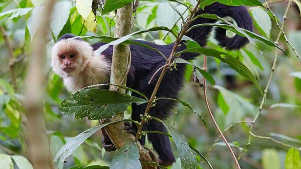 Costa Rica – Střední Amerika – 2014 – video