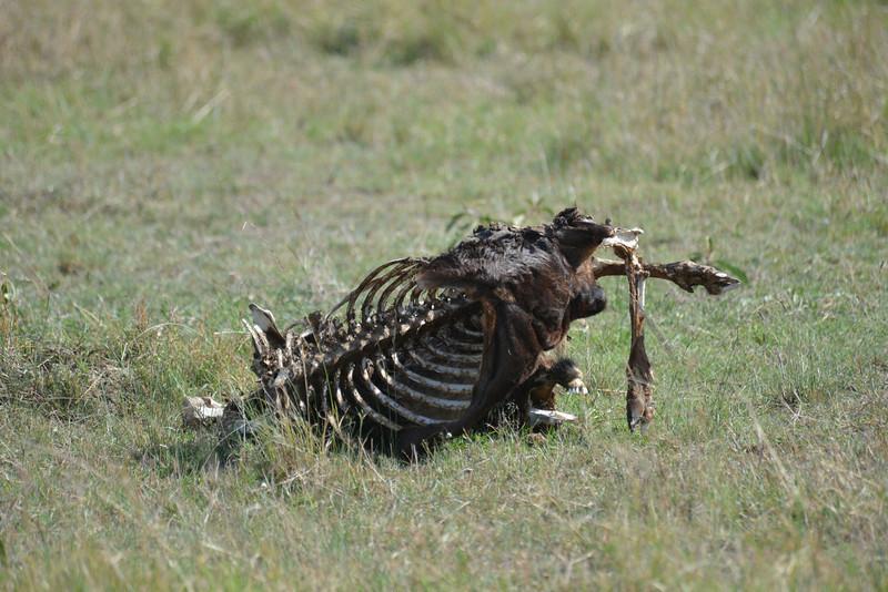 East Africa Safari 216.jpg