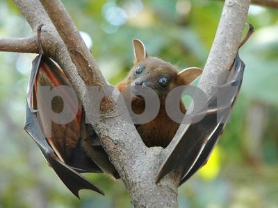 san-antonio-zoo-neuters-hundreds-of-bats