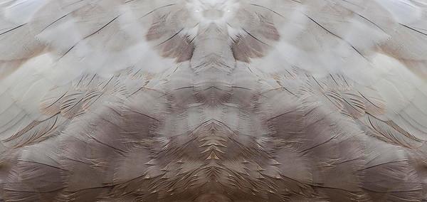 Reflections & Closeups