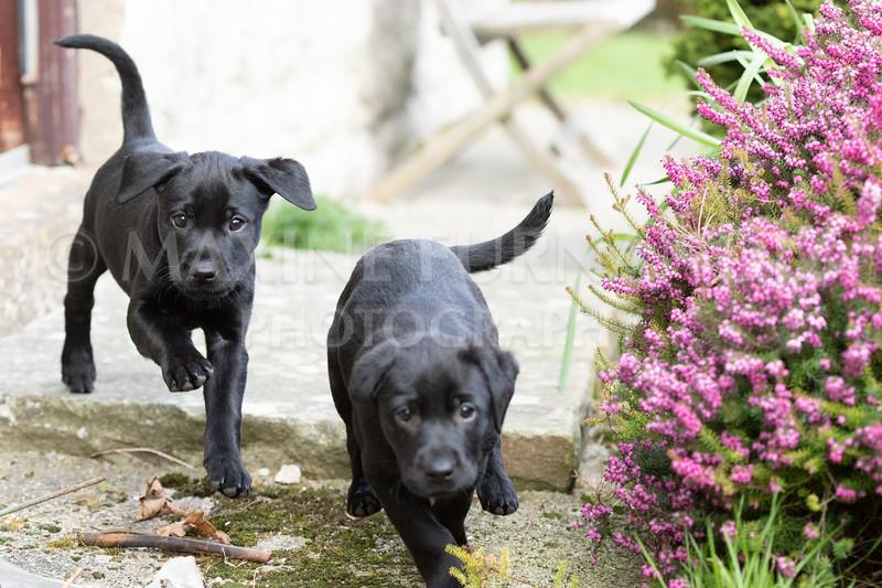 Weika Puppies 24 March 2019-6418.jpg