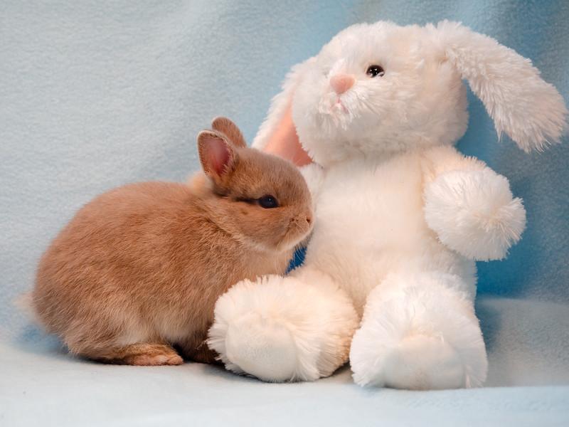 Baby Bunny and Stuffed Animal (photo 33426)