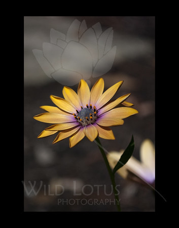 Calendars Against Cancer :: A Year in Bloom 2012