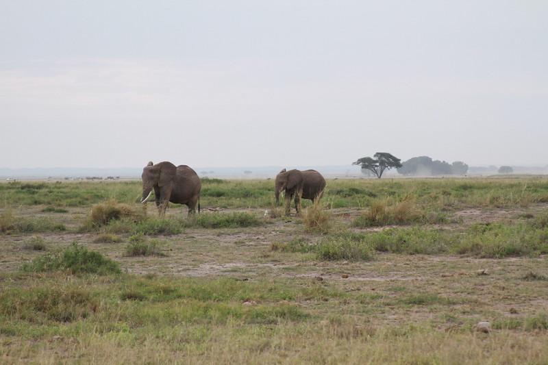 Kenya 2019 #2 412.JPG