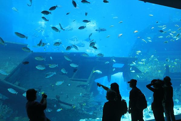 140305 - SEA Aquarium