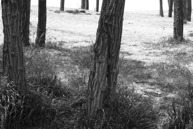 070518-004BW (Treescape).jpg