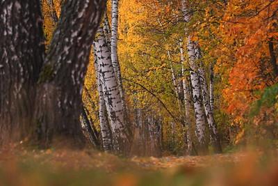 05.10.19 Осень ( Михаил Захаров )