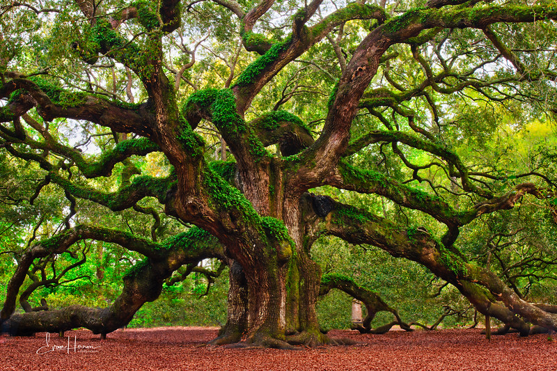 Angel Oak lg brighter.jpg