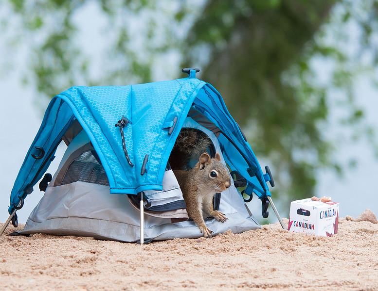 MCC4 Debbie Vokey Summer camping.jpg