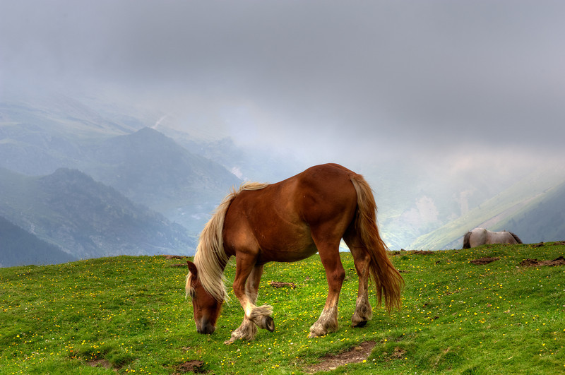 Horse on Pyrenees Mountaintop at Vall de Nuria, Spain