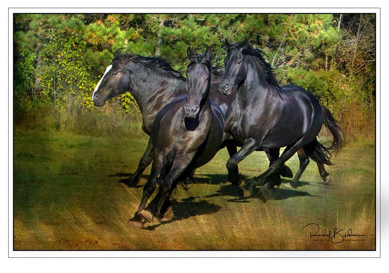 st-amable-161015-FFF-10743-wildlifemasterpices1.jpg