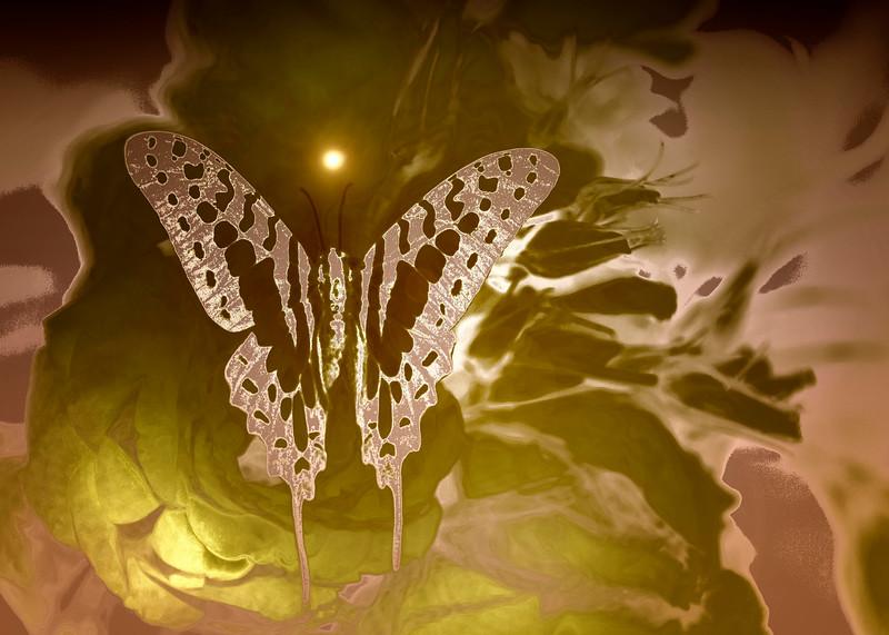 Digital color butterfly .jpg
