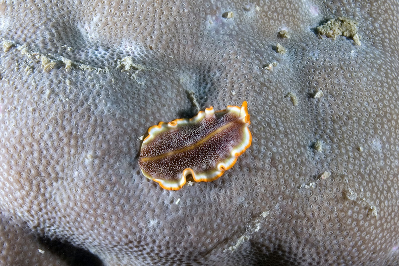 Flatworm 2.jpg
