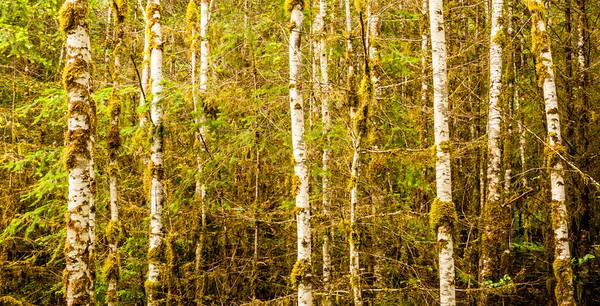Woodlands & Trees
