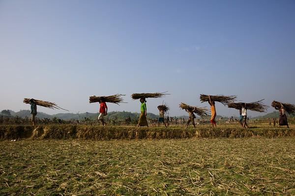 002-Firewood Collector- Rohingya Children