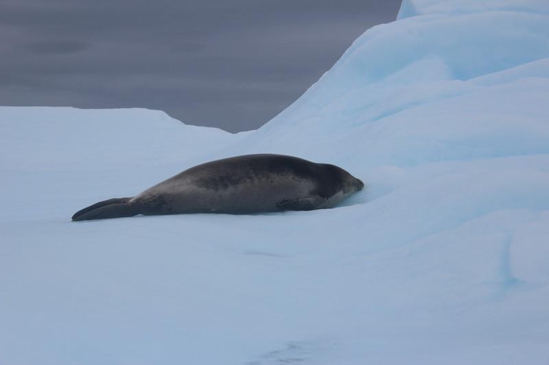 Antarctica 282.JPG