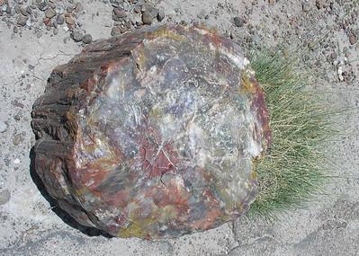 2006-08-8/9 - New Mex desert, Las Vegas, Redwoods