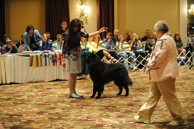 Best Of Breed: In The Ring