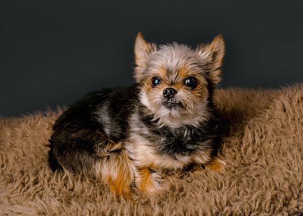 Pet: Rosco