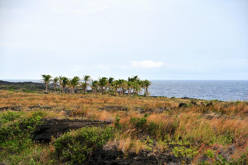 Big_Island_Trip_66.jpg