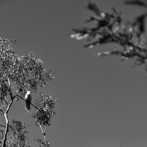Canberra 100km 14 Sept 2019  2 - 235.jpg