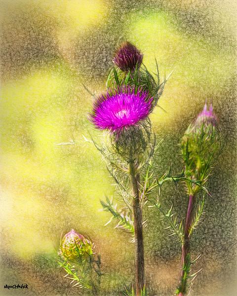 flowerwilderness.jpg