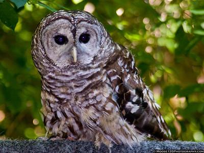 Theodore Roosevelt Bird Sanctuary