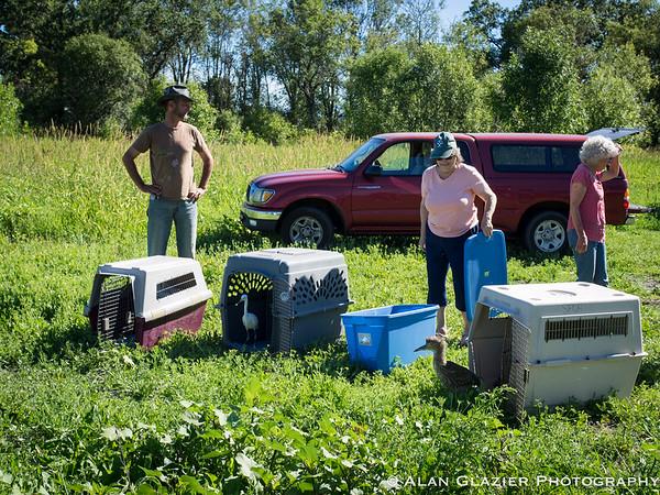Sonoma County Bird Rescue Release 06-17-17