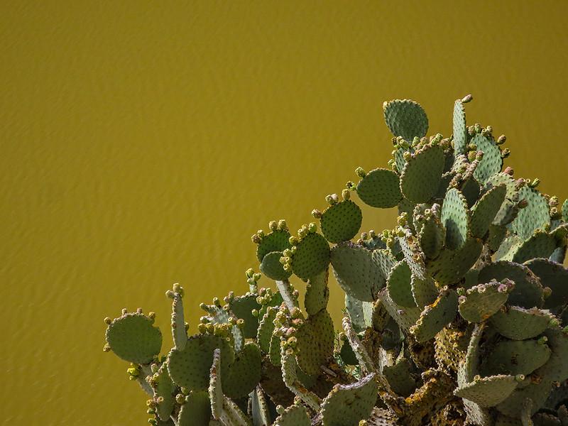 Rio Grande Cactus.jpg