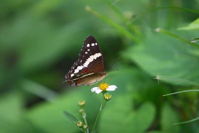 Palenque mariposa 40188.jpg