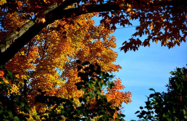 10/12/2016 Mike Orazzi | Staff Fall color on Jerome Avenue in Bristol.