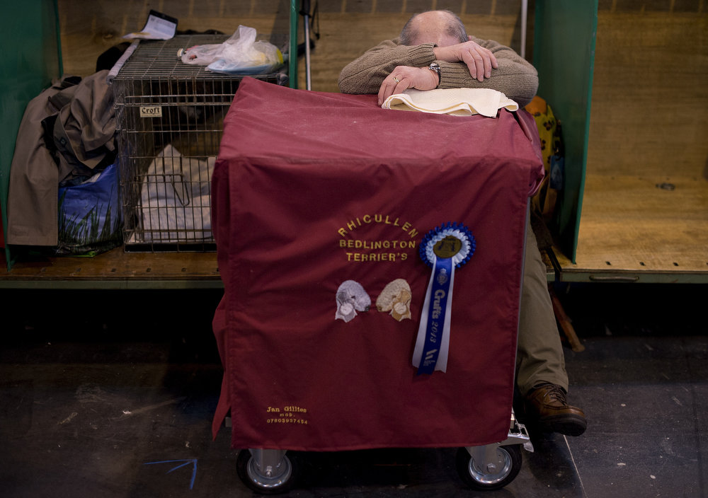 """. An owner rests during the first day of the Crufts dog show in Birmingham, in central England on March 7, 2013. The annual event sees dog breeders from around the world compete in a number of competitions with one dog going on to win the \""""Best in Show\"""" category. AFP PHOTO / BEN STANSALLBEN STANSALL,BEN STANSALL/AFP/Getty Images"""