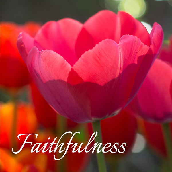 48_Galatians5-22-23_NJ_Fruit of the Spirit_4-23-17_7-Faithfulness.jpg