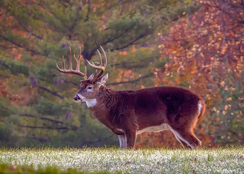 Buck)1.jpg