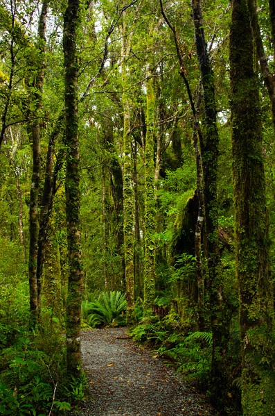 Milford Sound Forrest