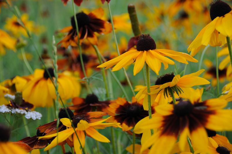 PIC_2904_20080715-016.jpg