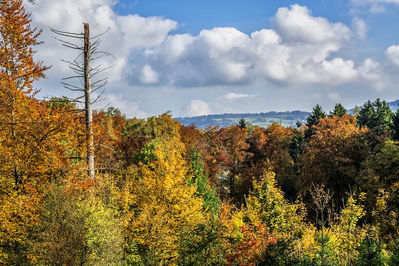 Wald bei Islisberg