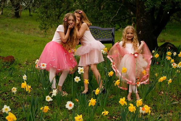 fairies in the daffodils