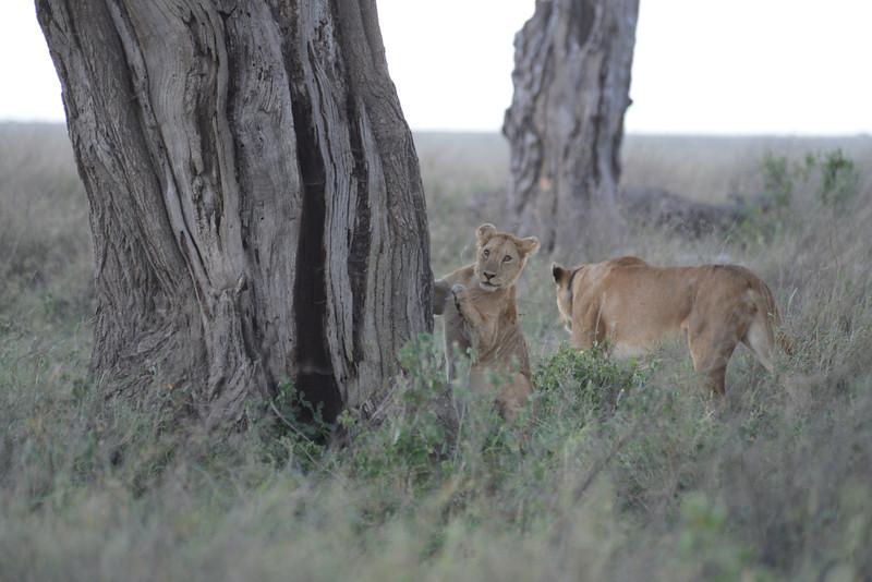 East Africa Safari 359.jpg