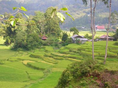 Tana Toraja Countryside