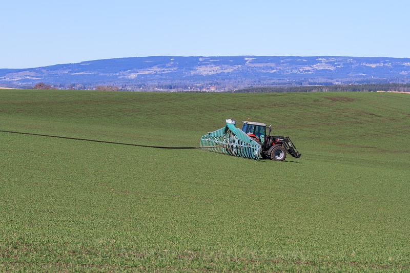 Gjødsling av høsthvete