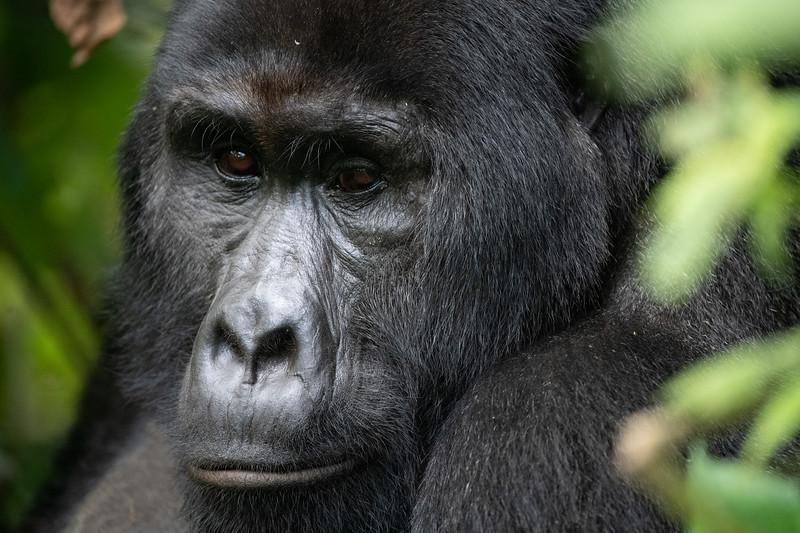 Uganda_T_Gor-2538.jpg