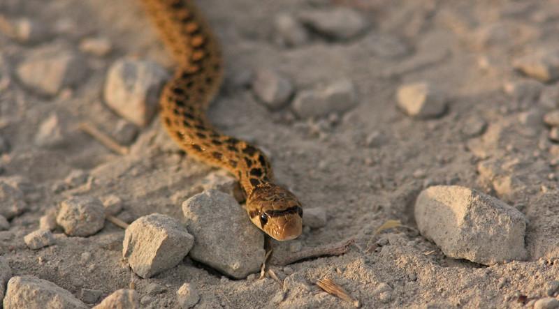 WB~Snake1280.jpg