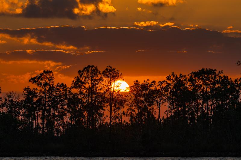 Everglades (30 of 37).jpg